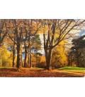 ideal Decor Resimli Dekoratif Duvar Kağıdı 366x254 cm Autumn Park 271